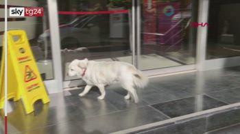 Turchia, cane aspetta il padrone malato di Covid fuori dall'ospedale