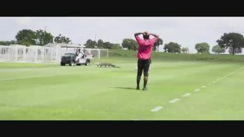 toronto alligatore video