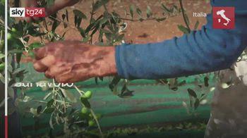 Covid, Mille agricoltori i primi vaccinati sul lavoro