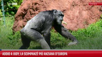 Addio a Judy, la scimpanz� pi� anziana d?Europa